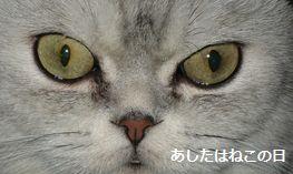 明日は猫の日・猫イメージ画像