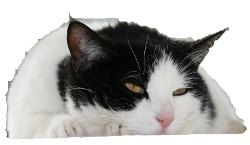 今日は猫の日 猫の画像